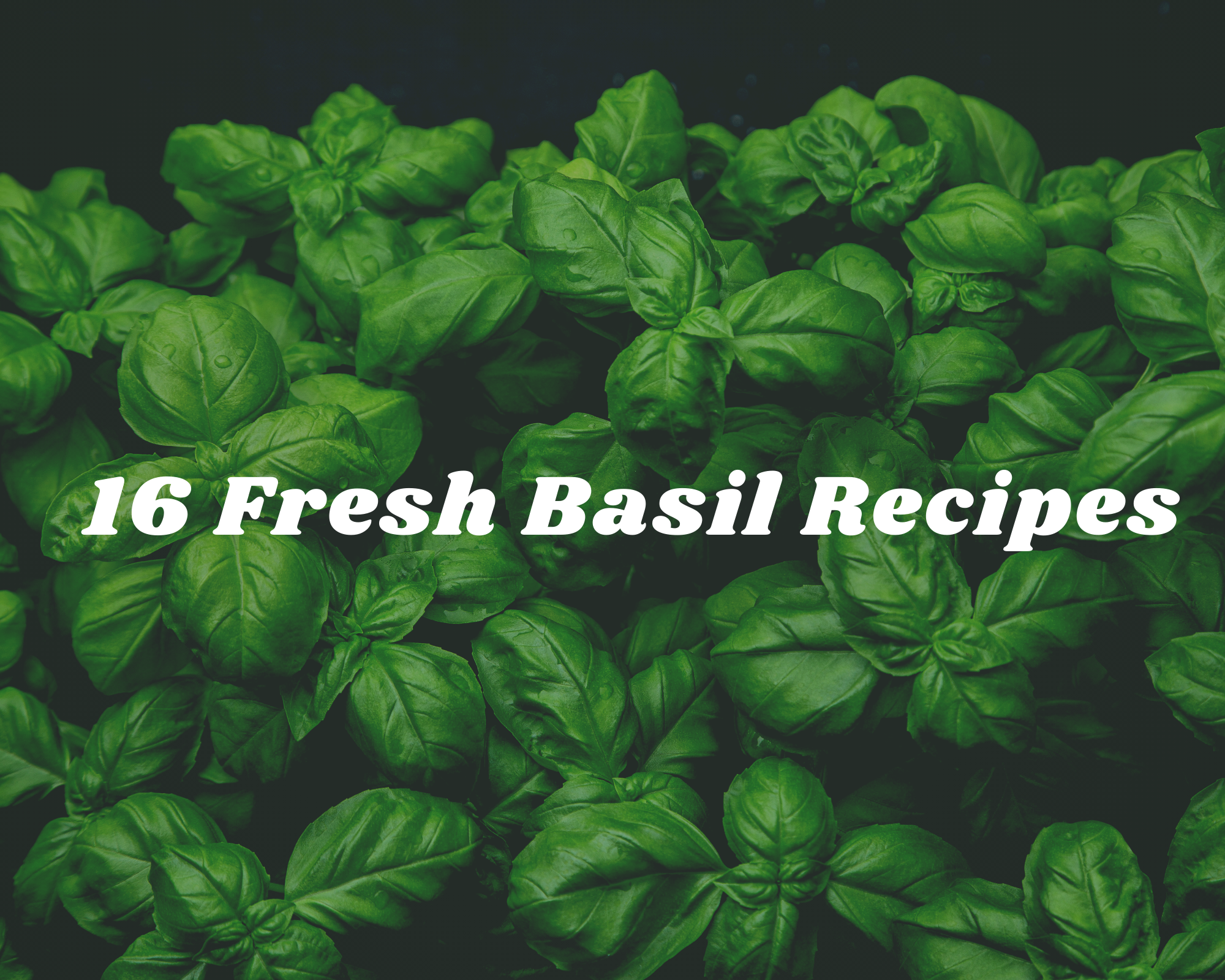 Summer recipes using fresh basil